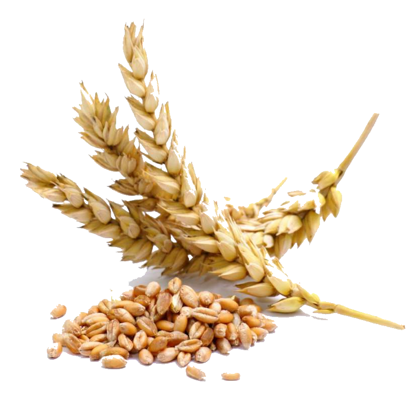 kisspng-wheat-berry-cereal-seed-whole-grain-wheat-flakes-5b4fb3ef5e96b6.7551444415319500633874